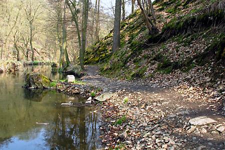 Pěšina u potoka.